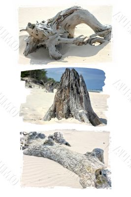 Logs and branches on the sand shore