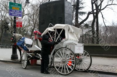 Carriage Driver in Winter