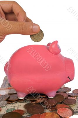 business savings in a piggy bank