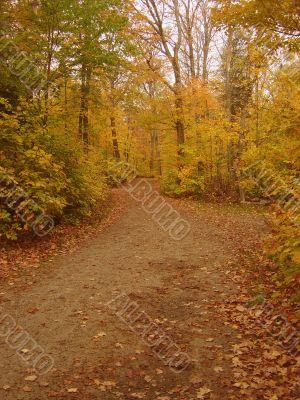 Autumn Dirt Pathway