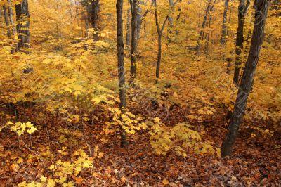 Full Fall Color