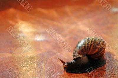 Snail over orange tile