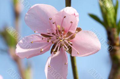 Macro photo of tree flower