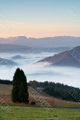 Solitary tree on the fog sea