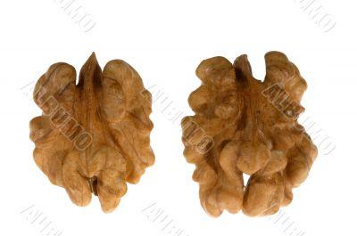 Two kernels of walnut