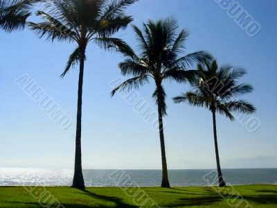 Palm trees at the beach