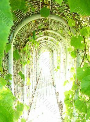 Tunnel of Grapevine
