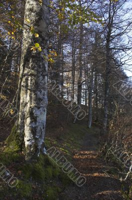 Path within Iraty Forest