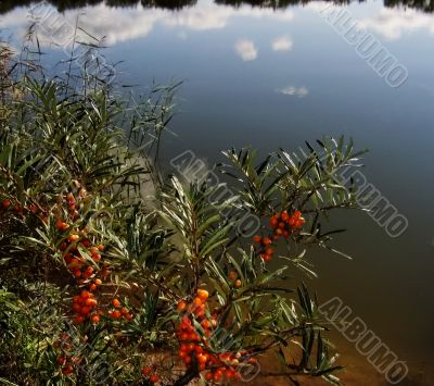 berries and water