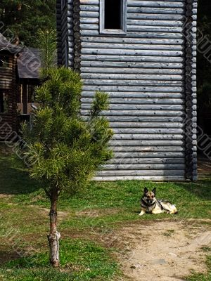 The wooden house and sentry dog