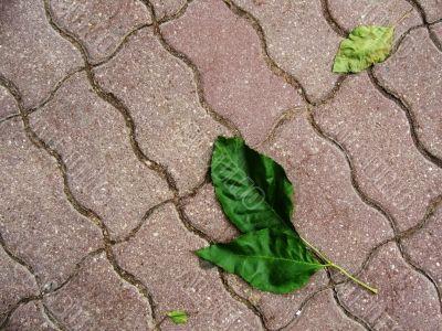 Green leaves on sidewalk