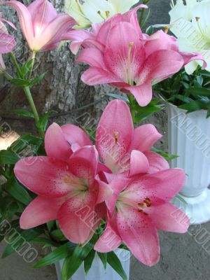 big rosy lilly bouquet
