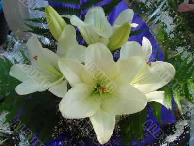 snowy white lilly bouquet