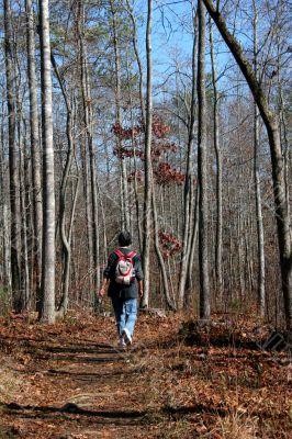 Woodland Hike