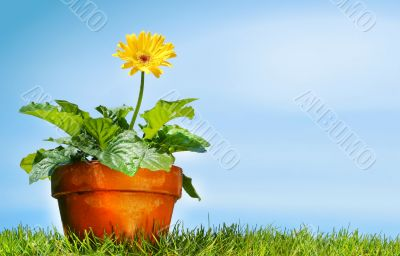 Flower pot on the grass