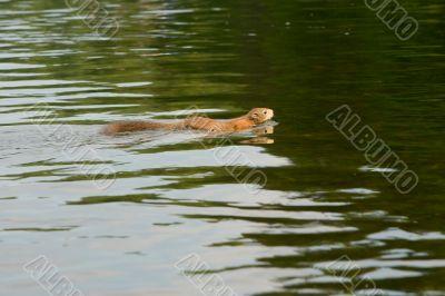 Fiber crossing small river
