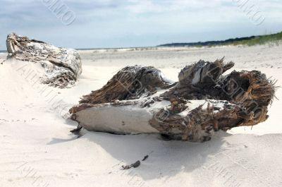 Log on the sand seashore.