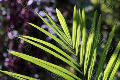 little palm tree leaf in jungle