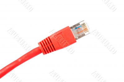 Red network cable isolated