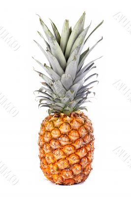 Colorful ripe pineapple