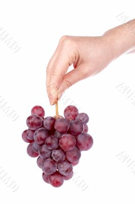 Holding a red grapes bunch