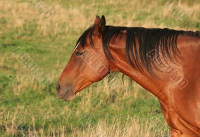 Horse Side Portrait
