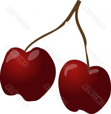 Cherries sketch