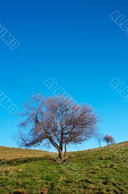 Solitary tree on blue sky