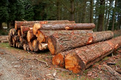 Logs stacked