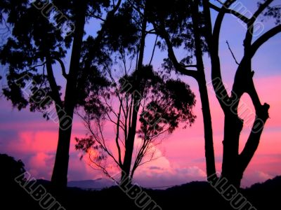 evening sky and trees silhouette