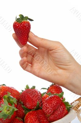 Holding a fresh juicy strawberry