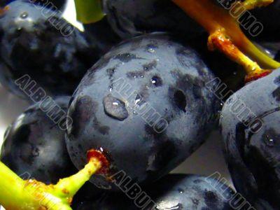 black and juicy grapes close up