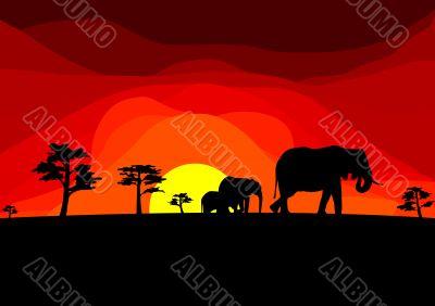 africa - elefants