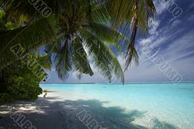 palmtrees and turquoise lagoon