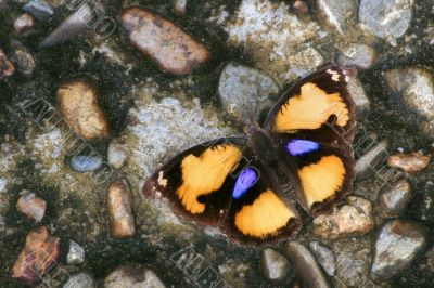 tropical butterfly on ground