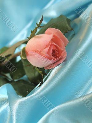 Pink rose on blue satin