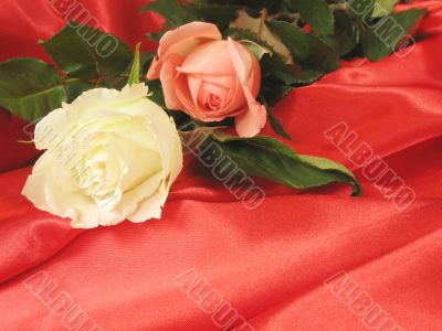 White and pink roses on red satin