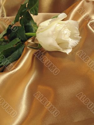 White rose on gold satin