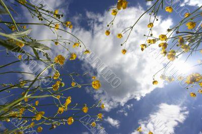 yellow flowers towards the sky