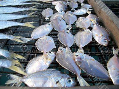 dried salty fish