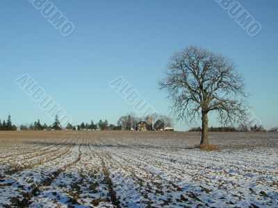 Lonely tree in the farmland