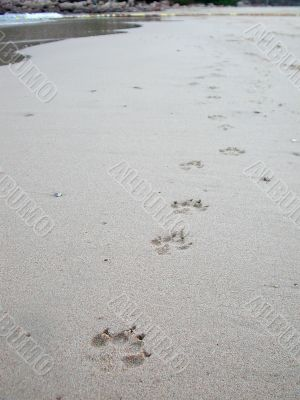 Paw prints on the beach