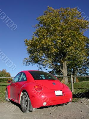 red new beetle