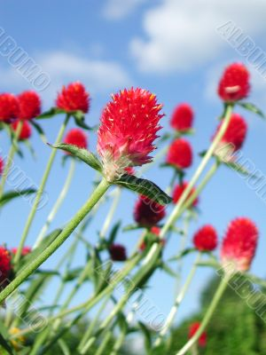 Red flower with full of vitality