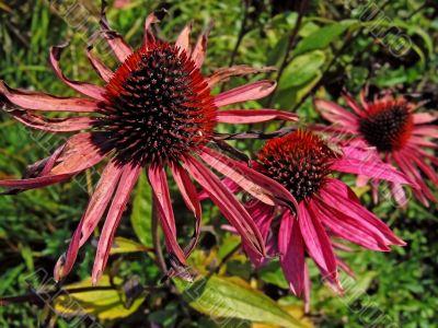 `Prickly` flower