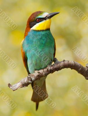 Bird precious