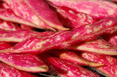 Borlotti bean pods close up