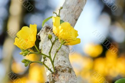 yellow tropical flowers