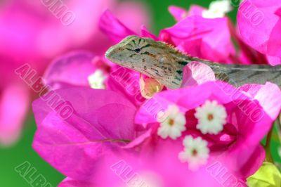 hidden tropical lizard