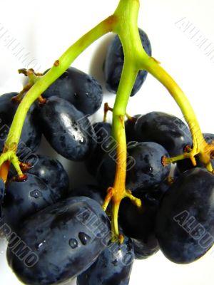 dark black juicy grapes